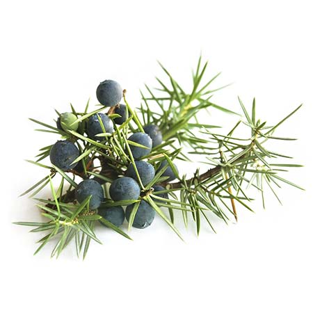 Juniper (Juniperus communis) oil