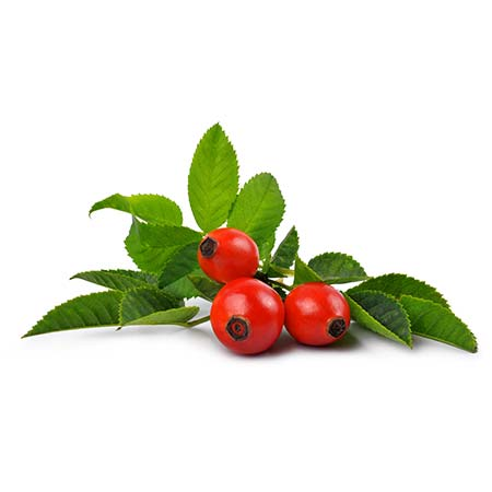 Rosehip (Rosa canina) seed CO2 extract